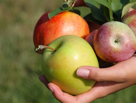 Apple January apples devotions by jan