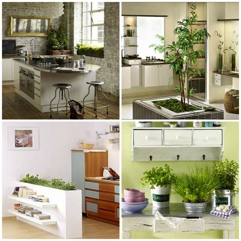 plants in the kitchen plants in the kitchen room image and wallper 2017