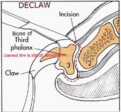 can you declaw a declawing cats the ask the cat doctor