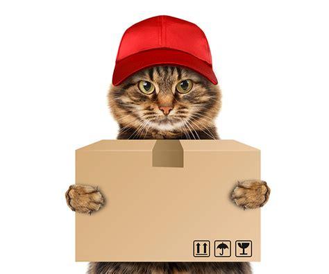 wallpaper chat humour fonds d ecran chat domestique casquette de baseball voir