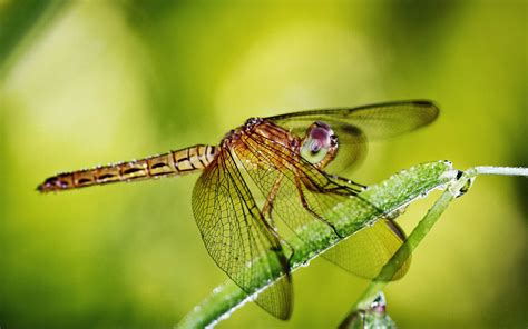 imagenes 4k wallpaper animales wallpapers dragonfly wallpapers