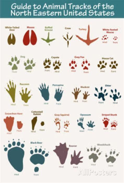 printable animal footprints north eastern animal tracks art poster print 11 x 17