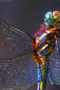 dragonfly colors dragonfly rainbow color mix