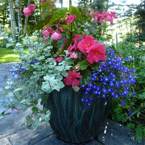 Flowers For Planters gardening services in jackson flower gardening