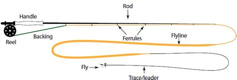 fishing rod parts diagram fishing learning and learning the of fly fishing