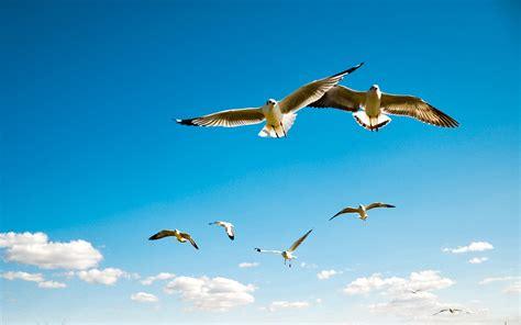 Fly To The Sky 1 2 обои птицы небо полет картинки на рабочий стол скачать бесплатно