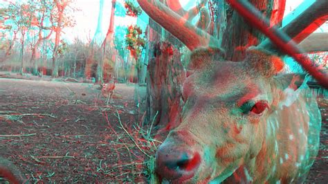 wallpaper 3d red cyan nature animal 3d movie red cyan anaglyph 3d hd video