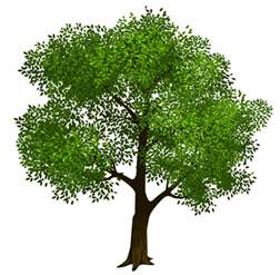 tree image transparent green tree clipart picture gallery