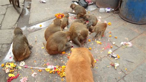 is feeding people food to pets ethical monkeys eating people feeding food with a dog in buddhism