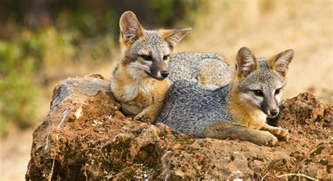 living  wildlife defenders  wildlife