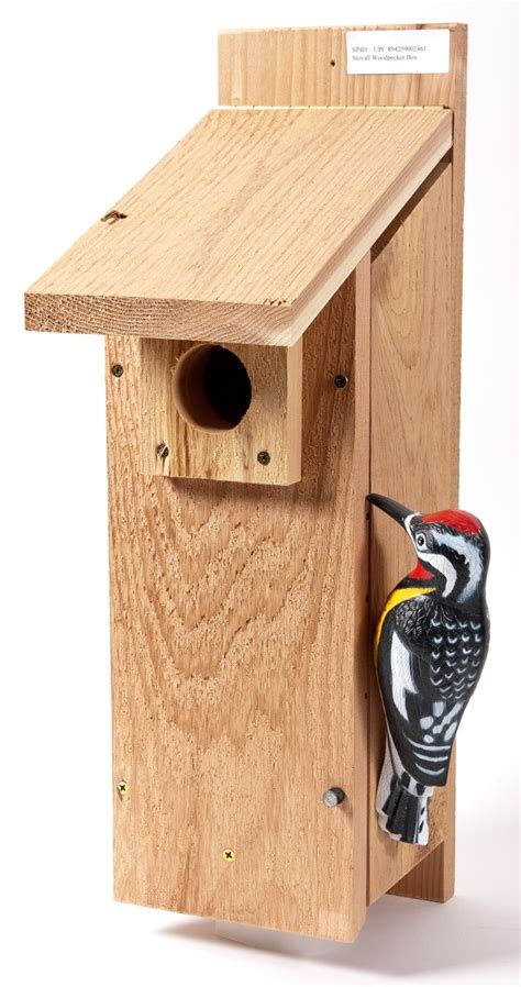 woodpecker on house siding woodpecker house plans house plans home designs