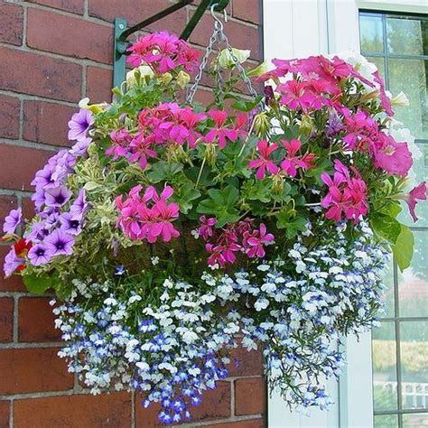 flowers for hanging baskets projects for my garden pinterest