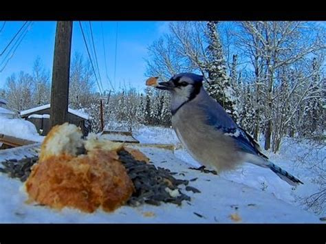 gopro hero 3 bird feeder cam youtube