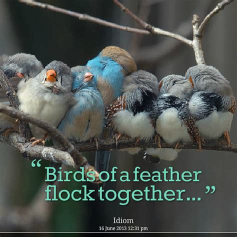 Birds Of A Feather by Birds Of A Feather Flock Together Susan Korwin
