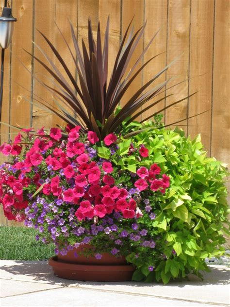 Plant Pot Ideas For The Patio by 25 Best Outdoor Flower Pots Trending Ideas On