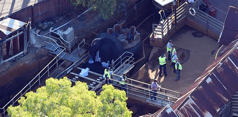 theme park deaths deaths at dreamworld theme park could lead to safety