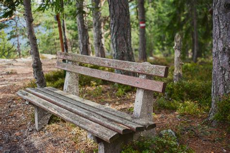 trail bench bench trail mariaalcocer com
