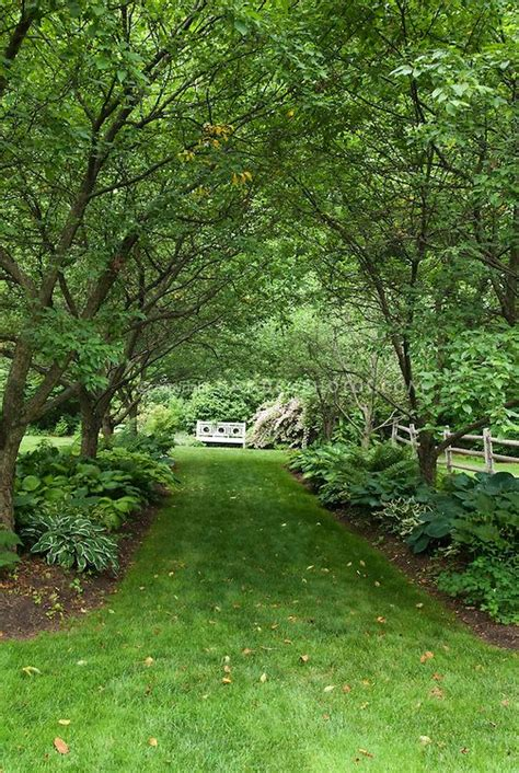 backyard shade trees backyard shade plants hosta mary mary quite contrary