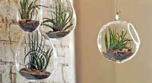 vase verre pour orchidee