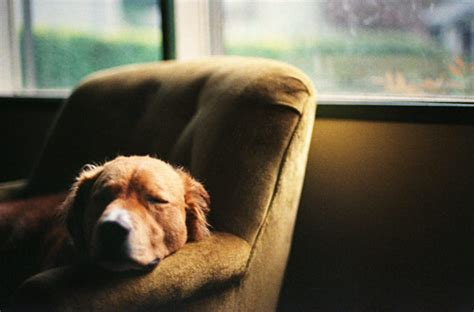 let sleeping dogs lie 35 cool pictures of dogs