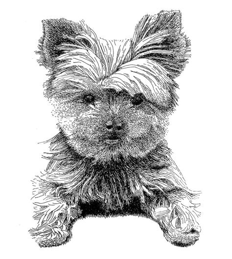 coloring page yorkie poo yorkie poo free coloring pages