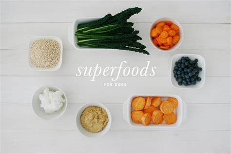 superfoods for dogs 7 superfoods for dogs pretty fluffy pretty fluffy