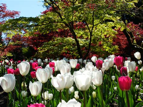 vandusen botanical garden hours vandusen botanical garden restaurant vandusen botanical