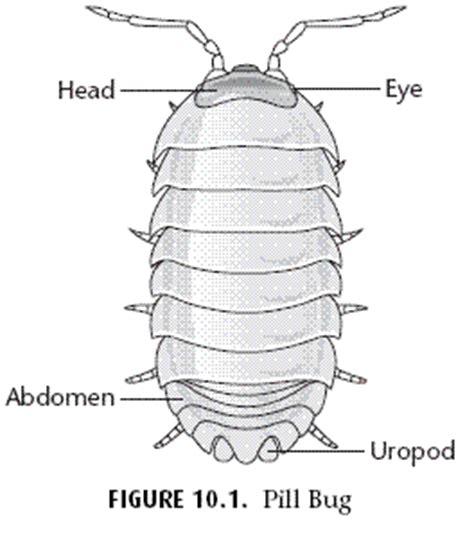 pillbug diagram arthropod behavior pill bug science zoology 1