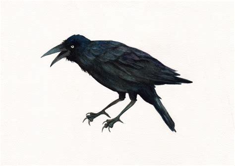 gwen burns angry crow