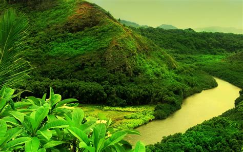 jungle wallpaper pinterest jungle forest hd wallpapers photos download free