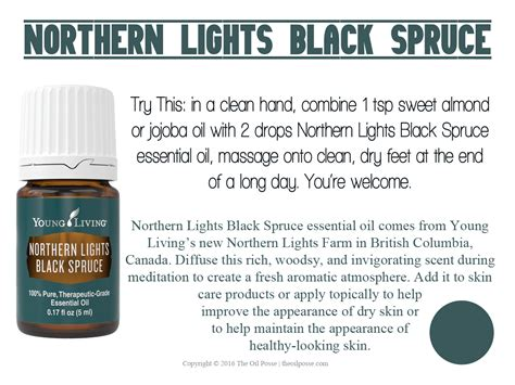 northern lights black spruce essential oil new card northern lights black spruce the oil posse