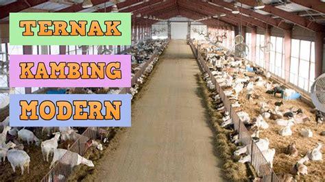 Fermentasi Pakan Ternak Kambing Tanpa Ngarit cara ternak kambing tanpa ngarit modern yang menguntungkan
