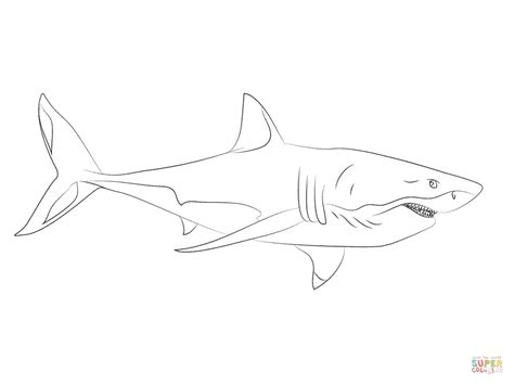 great white shark 3 coloring page free printable