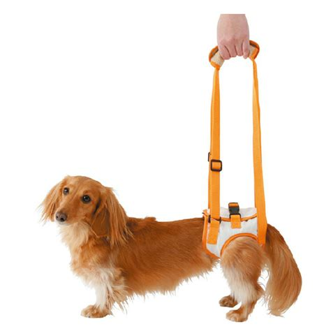 hind leg weakness petio elderly dogs dogs help disabled with a small medium and large dogs hind leg
