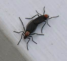 safe ways to get rid of bugs news