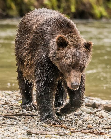 grizzly island boat launch outer islands and mainland inlets travel guide at wikivoyage