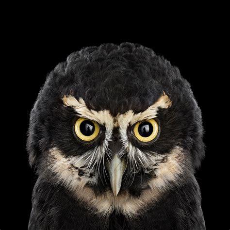 L Owl by Who S Who Audubon