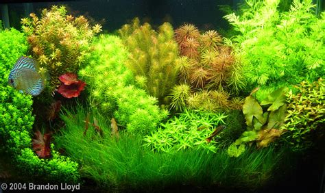 Aquascape Canada by 2004 Aga Aquascaping Contest Entry 142