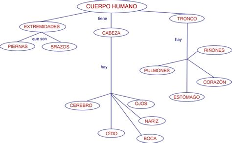 imagenes mapa mental del cuerpo humano untitled document www cca org mx