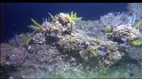 Flower Garden Banks National Marine Sanctuary Secrets Of Flower Garden Reef