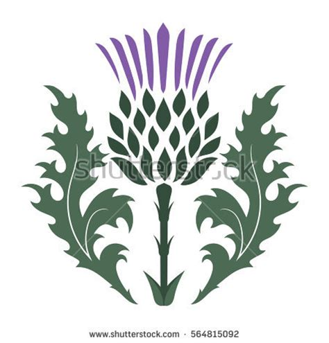 Scotlands Free Search Scottish Thistle Stock Images Royalty Free Images Vectors