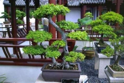 how to do backyard landscaping garden finance backyard landscaping designs with bonsai tree