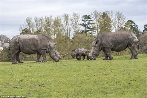 best safari park baby ekozu filmed meeting other west midlands safari park