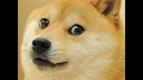 Doge Wow wow doge