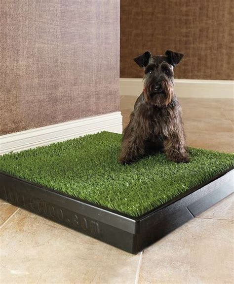 when to take puppy outside to potty toilets and pets on