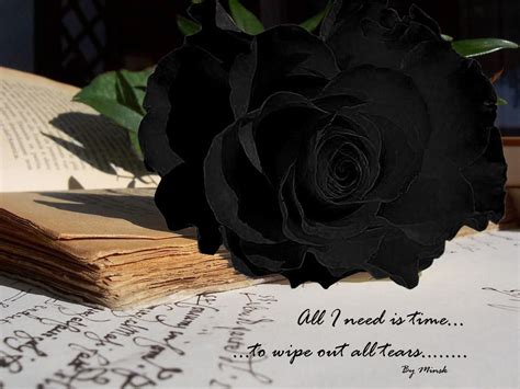 wallpaper flower black rose black rose wallpapers hd pictures one hd wallpaper