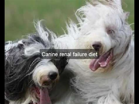 renal diet for dogs best canine renal failure diet for health helpful canine renal failure diet for