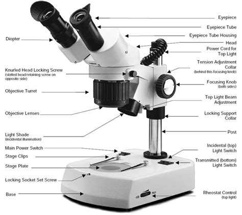 name one advantage of light microscopes electron microscopes 15 best images of microscope parts and functions worksheet