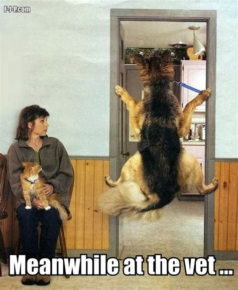 Dog Vet Meme - dog meanwhile at the vet funny joke pictures