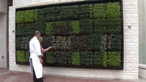 herbs on wall 105 best images about vertical gardening on pinterest